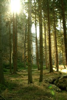 Free Rock In Mist Of Forest Stock Images - 4593374