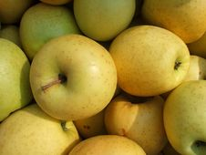 Free Organic Apples Royalty Free Stock Photography - 4593757