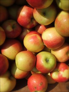 Free Organic Apples Stock Image - 4593811