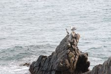 Free Gulls On The Rock Royalty Free Stock Photography - 4594047