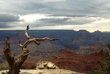 Free Dry Tree Above The Grand Canyon, Arizona Royalty Free Stock Photos - 4594228
