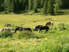 Free Horses Stock Image - 4594421