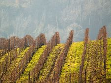 Free Italian Vineyards Royalty Free Stock Image - 4594506