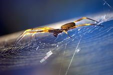 Free Golden Orb Stock Photography - 4596072