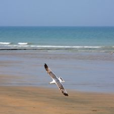 Free Seagull Over A Beach Stock Image - 4596561