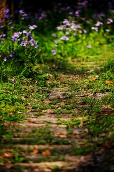 Free Flower Path Stock Image - 4597701