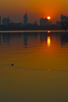 Lake Duck And The Sunset Royalty Free Stock Photo