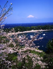Free Mt Fuji-381 Royalty Free Stock Photography - 4598817