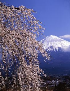 Free Mt Fuji-371 Stock Photos - 4598903