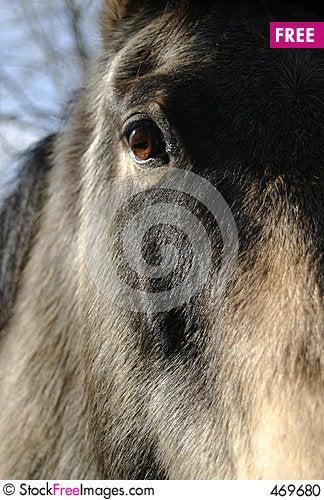 Free Horse Eye Stock Photo - 469680