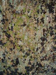 Free Moss And Lichen On Rock Stock Photo - 460050