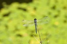 Free Dragonfly Stock Photos - 461683