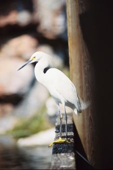 Free Bird Royalty Free Stock Photo - 462425