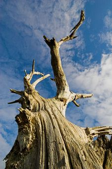 Free Dead Tree 5515 Stock Images - 467224