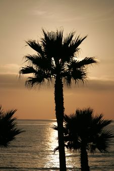 Free Silhouette Sunset Palm Trees Royalty Free Stock Photo - 467425