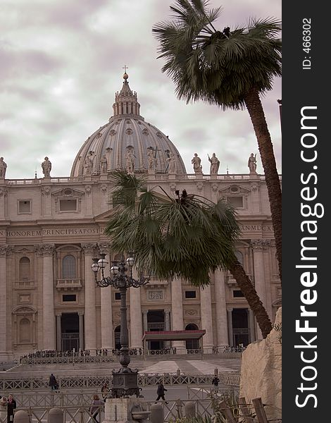 Palms in vatican