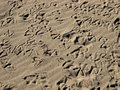 Free Seagull Tracks Royalty Free Stock Photos - 4603738