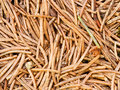 Free Pine Needles Stock Photography - 4606772