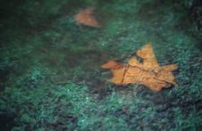 Free Frozen Leaves Royalty Free Stock Photography - 4600057