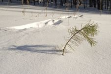 Free Traces On Snow. Royalty Free Stock Image - 4600136