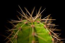 Free Cactus Royalty Free Stock Image - 4601846