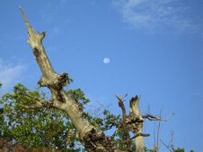 Moon Over Mangrove & Sea Oats Stock Images