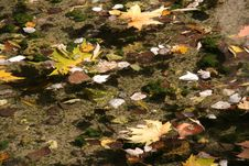 Autumn Leaves Floating On Water Royalty Free Stock Photos