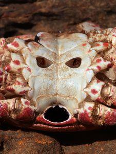 Free Demon Crab Royalty Free Stock Photo - 4603545