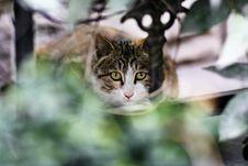 Free Cat Royalty Free Stock Image - 4605446