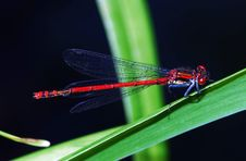 Free Dragon Fly Royalty Free Stock Image - 4605646