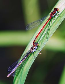 Free Dragon Fly Stock Photos - 4605863