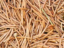 Free Pine Needles Stock Photography - 4606772