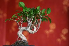 Free Bonsai Stock Photo - 4606860