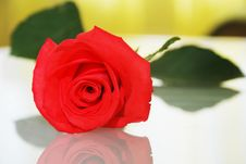 Free Red Rose Closed Up Isolated On White Royalty Free Stock Photo - 4608205