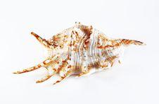 Free Sea Shell Stock Image - 4608511