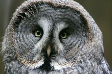 Free Owl Stock Image - 4608611
