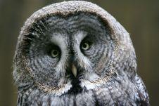 Free Owl Stock Image - 4608641