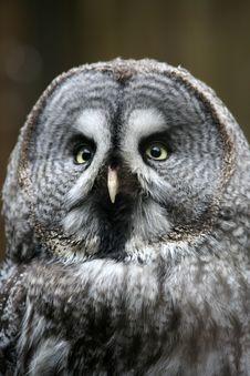 Free Owl Stock Image - 4608971