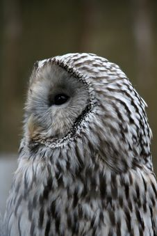 Free Owl Stock Photography - 4609002