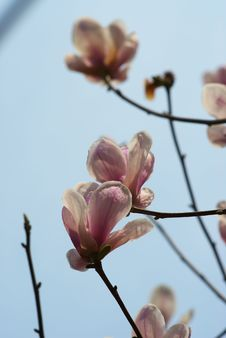 Free Flower Stock Photo - 4609110