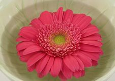 Free Pink Gerbera Daisy Floating  In A Green Bowl Royalty Free Stock Images - 4609369