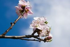 Free Blossoms Stock Photography - 4609382