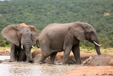 Free Elephants Bathing Stock Image - 4609471