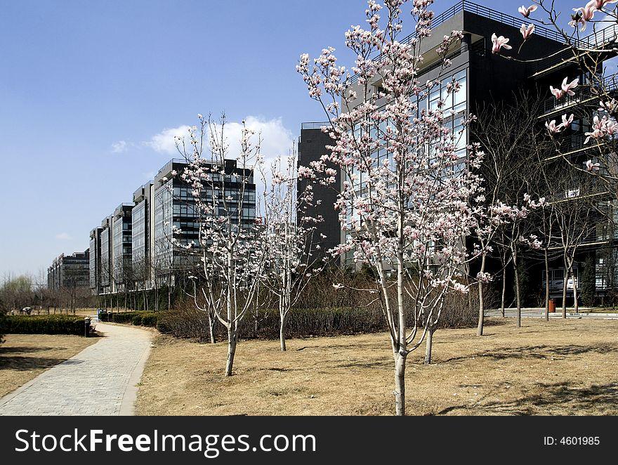 Hi-Tech garden of Beijing.