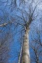 Free Beech Tree Stock Image - 4610291
