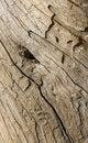 Free Driftwood Eye Stock Images - 4611754