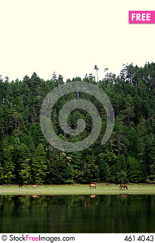 Free Horses Between Forest And The Lake Stock Photos - 4614043