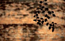 Free Branch In Front Of Brick Wall Royalty Free Stock Images - 4611689