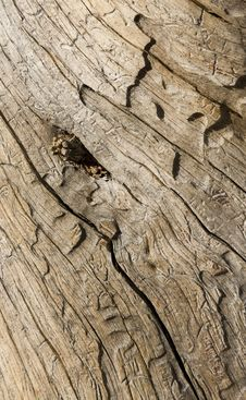 Free Driftwood Eye Stock Images - 4611754