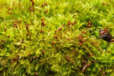 Free Moss Royalty Free Stock Photos - 4612228
